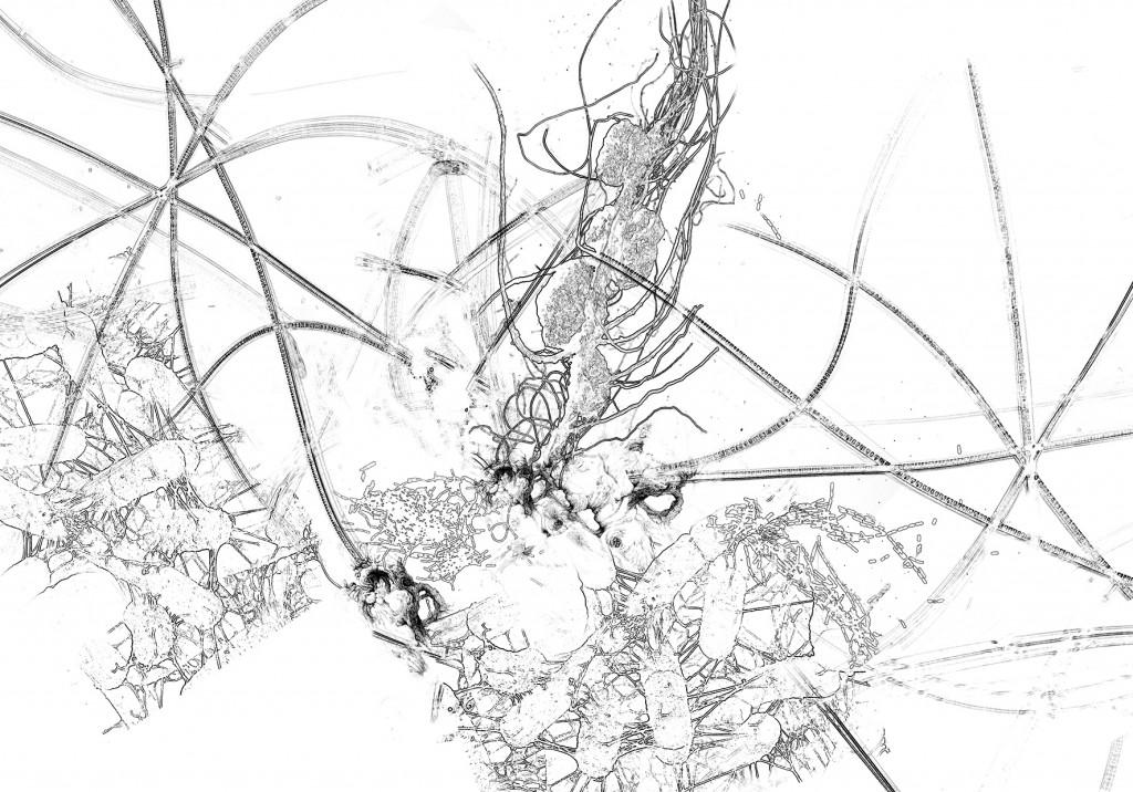Bacillus (Bt) n°9, dessin sur papier, 140 x 200 cm, 2017. Transfiguration et dévoilement de la bactérie Bacillus
