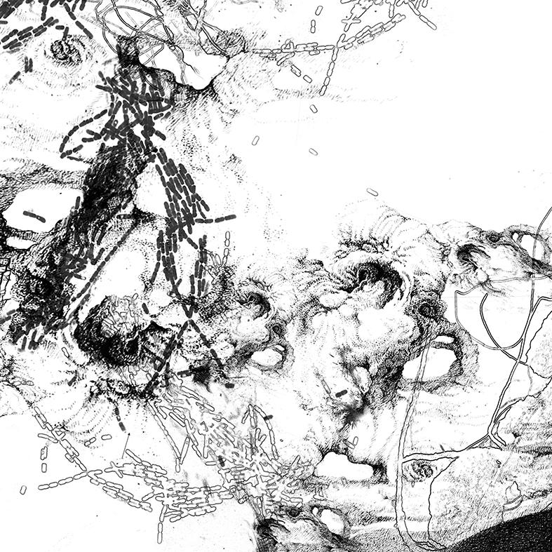 Bacillus (Bt) n°2, dessin sur plexiglass, 80 x 80 cm, 2017. Transfiguration et dévoilement de la bactérie Bacillus thuringiensis (Bt) utilisée classiquement en agriculture.