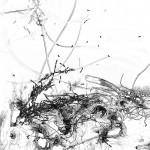 Bacillus (Bt) n°3, dessin sur plexiglass, 80 x 80 cm, 2017. Transfiguration et dévoilement de la bactérie Bacillus thuringiensis (Bt) utilisée classiquement en agriculture.